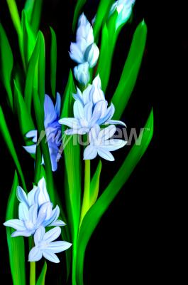 Lazurowe kwiaty