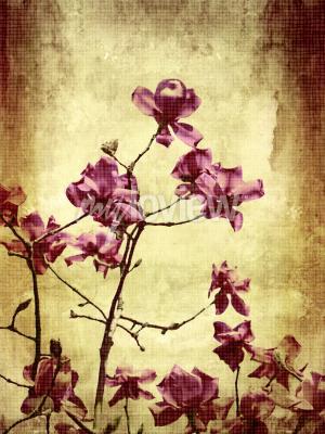Fototapeta Beautiful grunge background with magnolia flowers