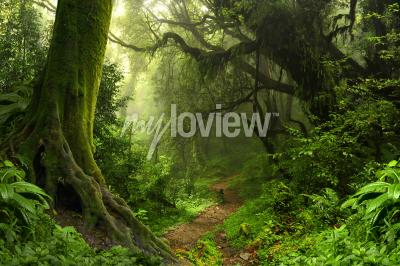 Fototapeta Tropical rain forest