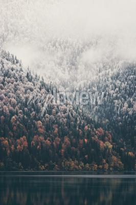 Foggy coniferous forest and lake wild woods landscape