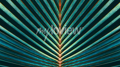 Fototapeta Striped of palm leaf