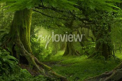 Fototapeta Tropical jungle in Southeast Asia