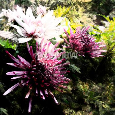 Fototapeta Stylized bouquet of chrysanthemums on grunge striped and stained background