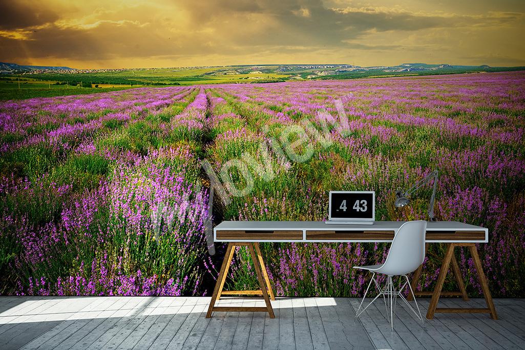 Fototapeta lawenda krajobraz Prowansji