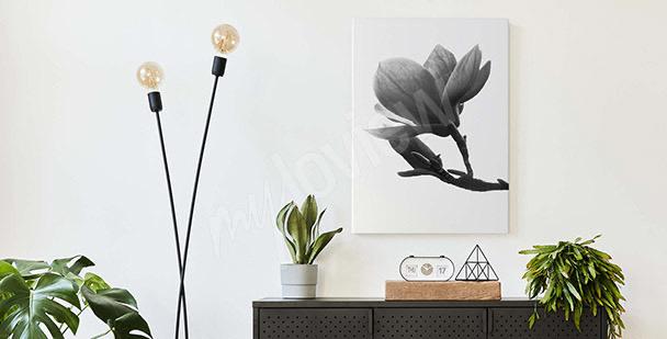 Czarno-biały obraz magnolia