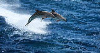 Delfiny