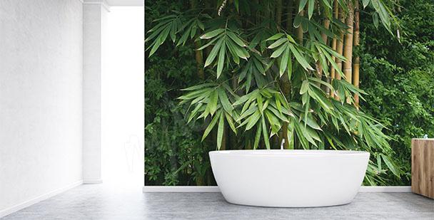 Fototapeta bambusowy gąszcz