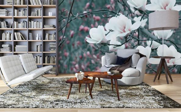 Fototapeta białe kwiaty magnolii