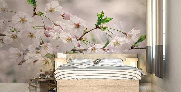 Fototapeta białe kwiaty wiśni