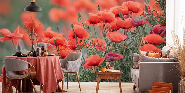 Fototapeta czerwone kwiaty