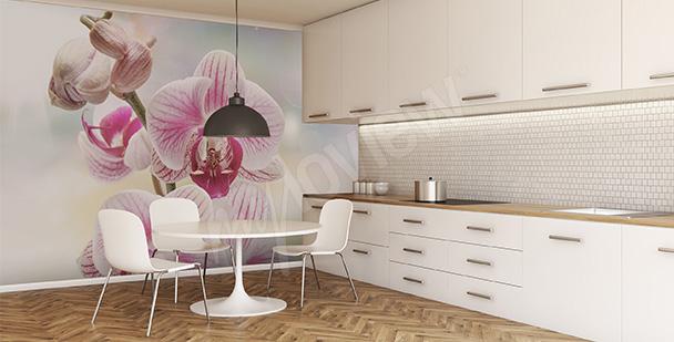 Fototapety Do Kuchni Orchidea Fototapeta Myloviewpl