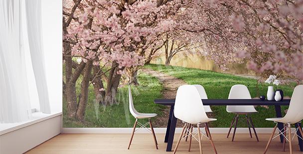 Fototapeta drzewa wiśniowe w parku