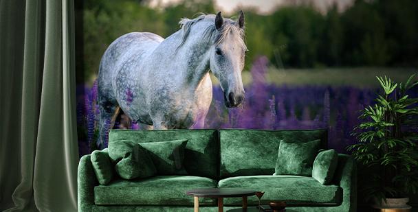 Fototapeta koń na polu lawendy