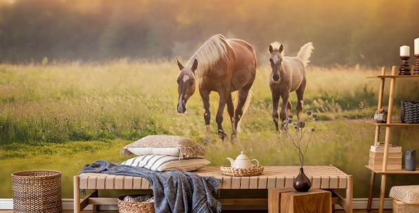 Fototapeta konie o zachodzie słońca