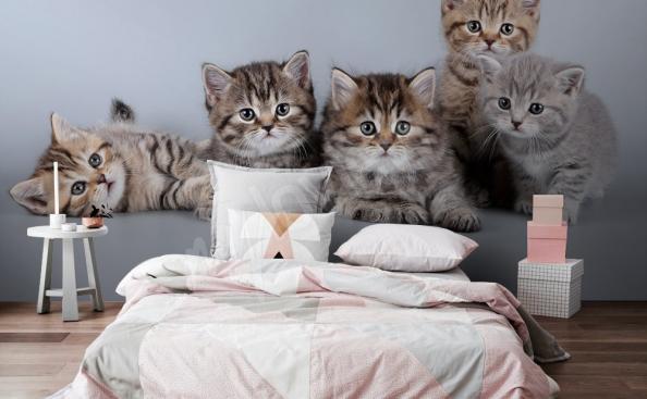 Fototapeta kotki do sypialni