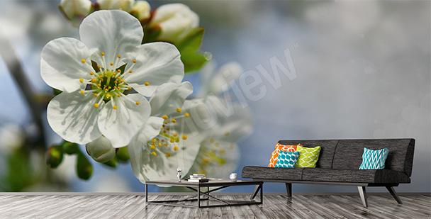 Fototapeta kwitnąca wiśnia 3D
