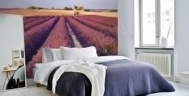 Fototapeta lawendowa łąka