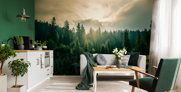 Fototapeta leśna natura