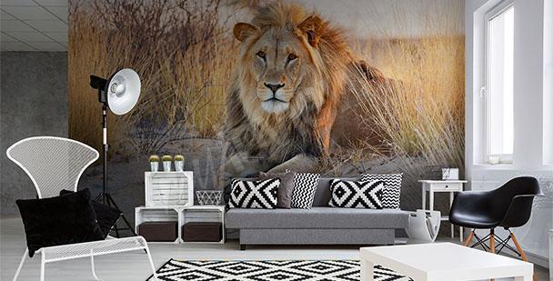Fototapeta lew afrykański