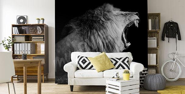 Fototapeta lew czarno-biała