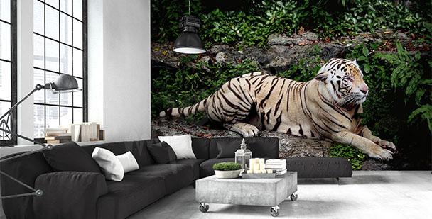 Fototapeta leżący tygrys