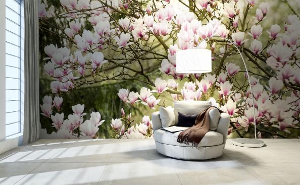 Fototapeta magnolia w ogrodzie