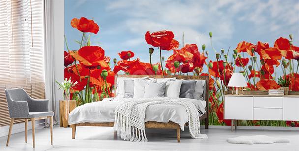 Fototapeta kwiaty na polanie