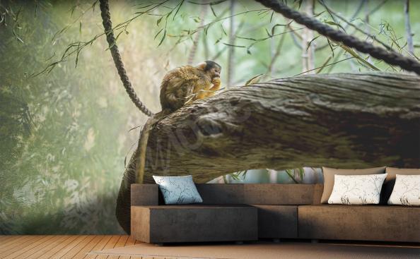 Fototapeta małpa zwierzęta dżungli