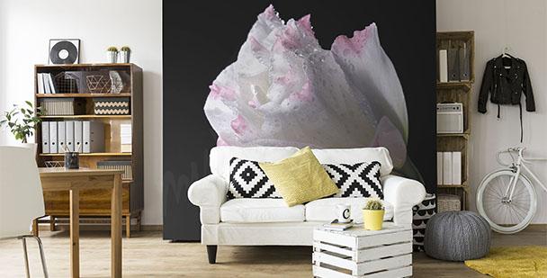 Fototapeta minimalistyczna róża