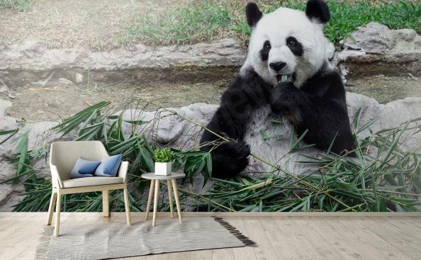 Fototapeta panda wielka 3D