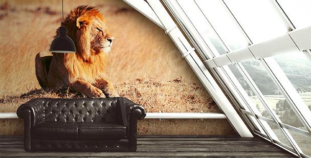Fototapeta samiec lwa