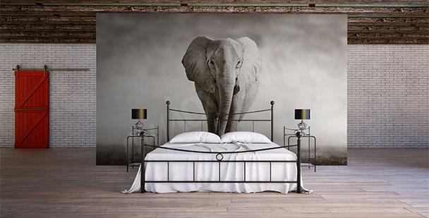 Fototapeta słoń do sypialni