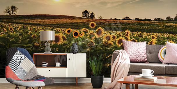 Fototapeta słoneczniki w polu