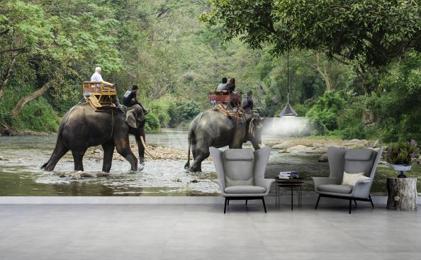 Fototapeta słonie do salonu nowoczesnego
