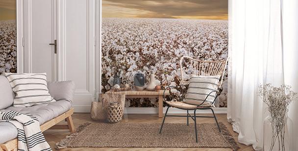 Fototapeta uprawa bawełny