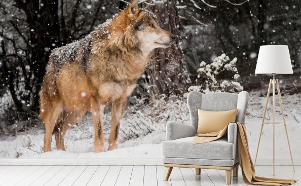 Fototapeta wilk w zimowym lesie