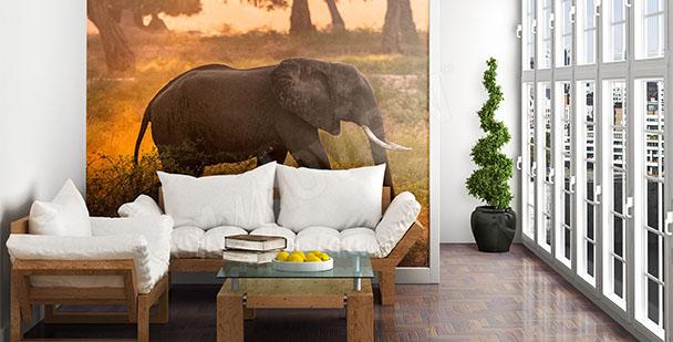 Fototapeta ze słoniem 3D