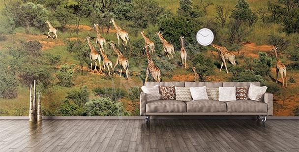 Fototapeta zwierzęta Afryki