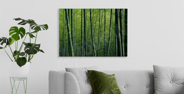 Obraz bambus w lesie