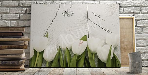 Obraz białe tulipany