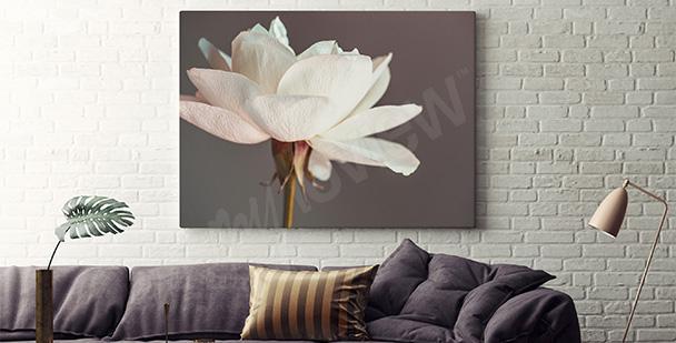 Obraz biały kwiat do salonu