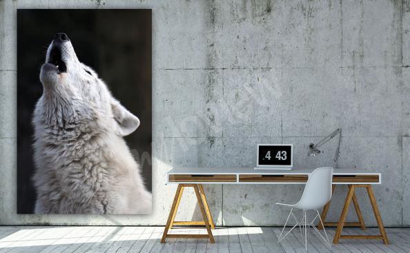 Obraz biały wilk