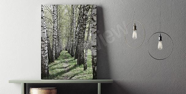 Obraz brzozowy las