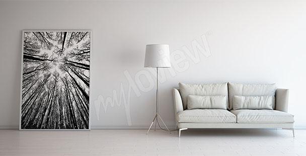 Obraz drzewa czarno-białe