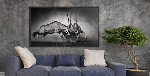 Obraz dzikie zwierzęta