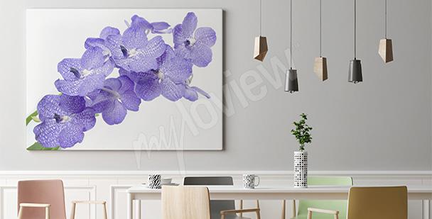 Obraz fioletowa orchidea