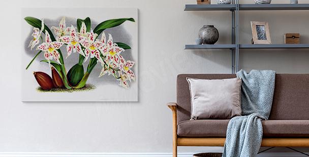 Obraz różowa orchidea