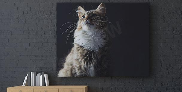 Obraz kot na czarnym tle