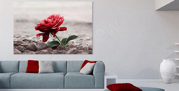 Obraz kwiat róży do salonu