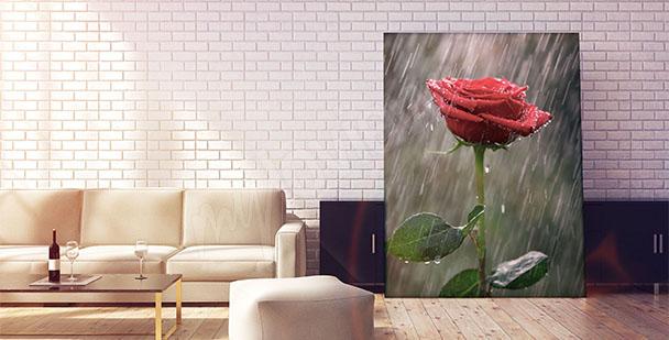 Obraz kwiat róży w deszczu